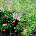 Diorama - Sommerfugl i epletreet